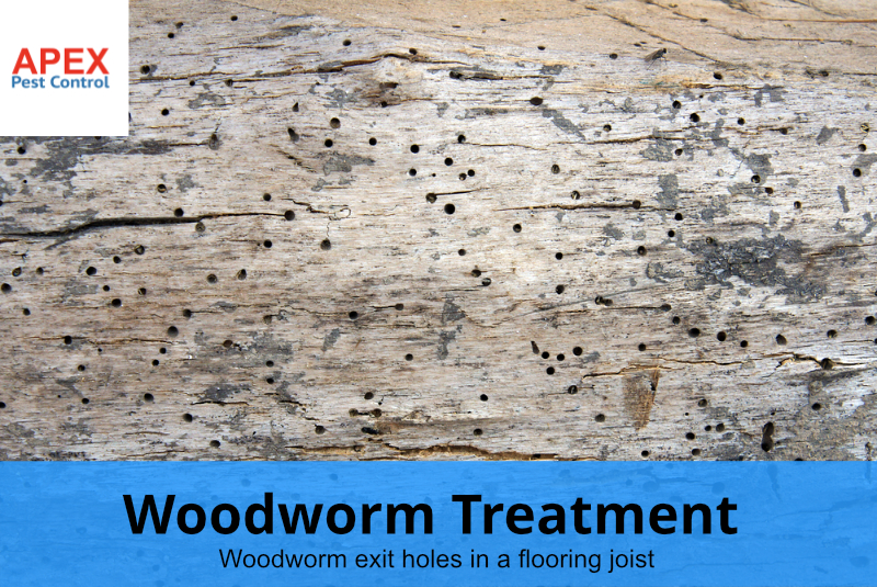 Woodworm treatment - woodworm exit holes in wood